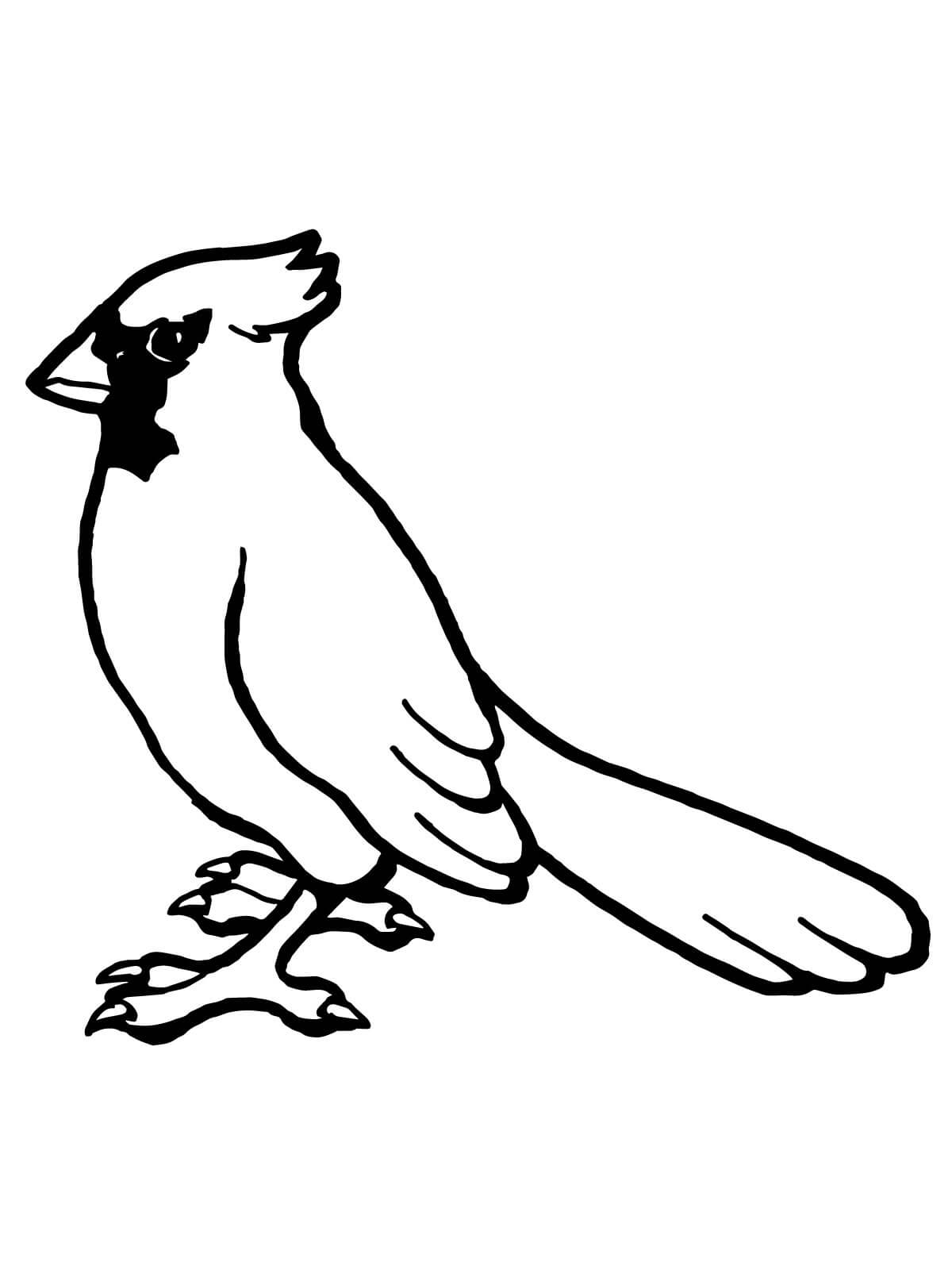 cardinals coloring pages with multiplication | Cardinal Coloring Pages - Worksheet School