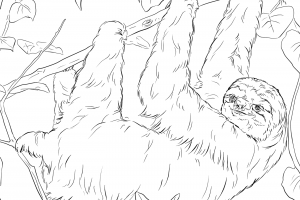 sloth free coloring pages