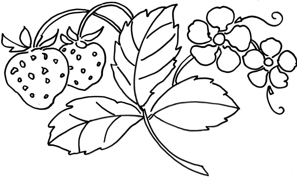 strawberry flower coloring pages