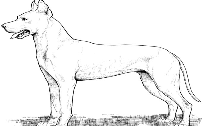 greate dane coloring pages
