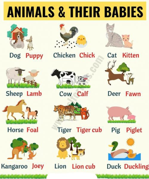 Baby Animals and their Parents | Worksheet School