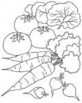 Vegetables Worksheets 4